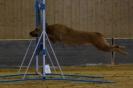 Agility-Turnier am 07./08.11.2009