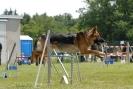 Agilityturnier am 01.07.2007