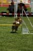 Bayerische Meisterschaft Agility am 02.07.2006