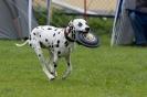 Disc Dog Turnier am 19.07.2009