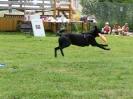 DiscDog-Vorführung bei den Hundefreunden Eggenfelden am 01.06.2008
