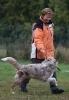 Obedience-Prüfung am 24./25.10.2009  _3